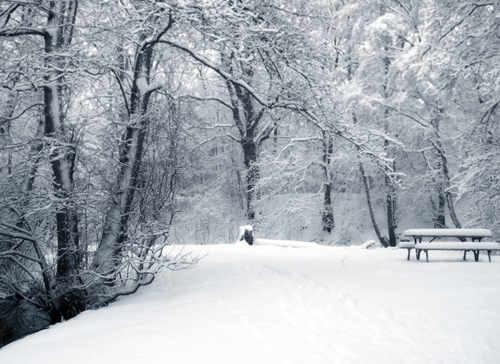 snow-23.jpg