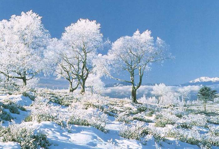1102135937265_snow-11.jpg
